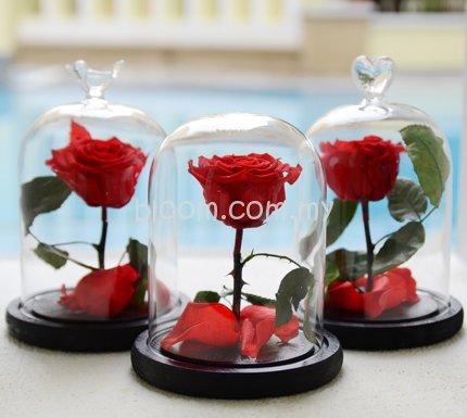 Everlasting Flower Jar 01